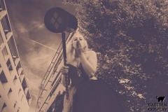 catleencosplay-harleyquinn-dccomics11